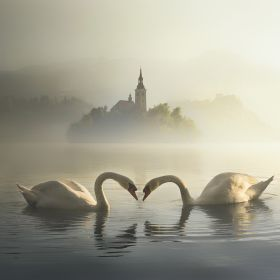 Morning Bled