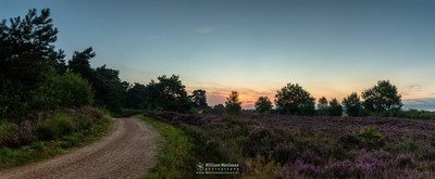 Panorama - Heather Path