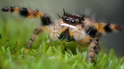 Spider Hug