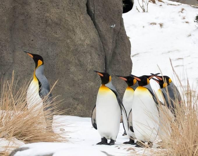Follow the leader  by KatnPat - Winter Wildlife Photo Contest