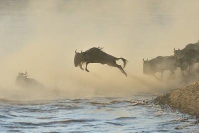 Silhouette..Masai Mara 20130001-100353