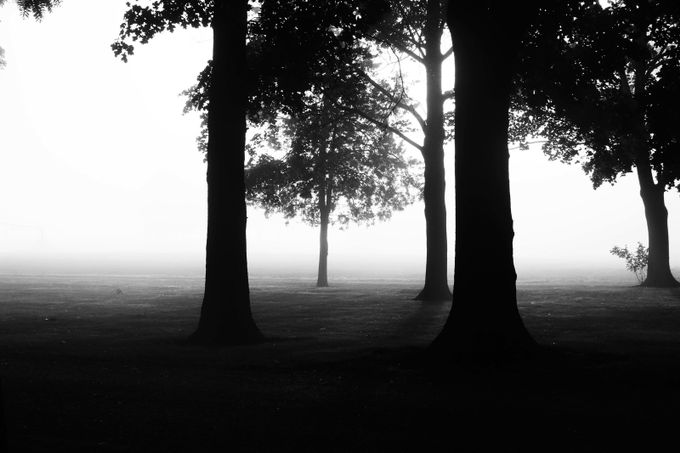 Foggy Morning by KimberlyHibbard - Tree Silhouettes Photo Contest