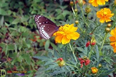 Butterfly.. Fly away