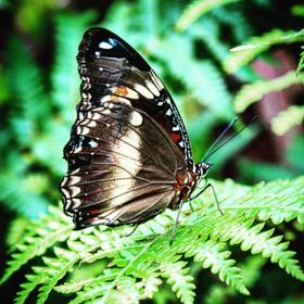 Butterfly standing on a fern #nature