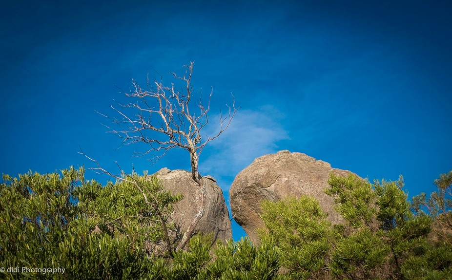 an afternoon shot looking at the contrast in nature with alive and dormant pieces intertwined in ...