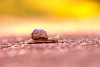 Snail Fine Art