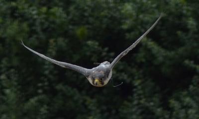 falcon1 086
