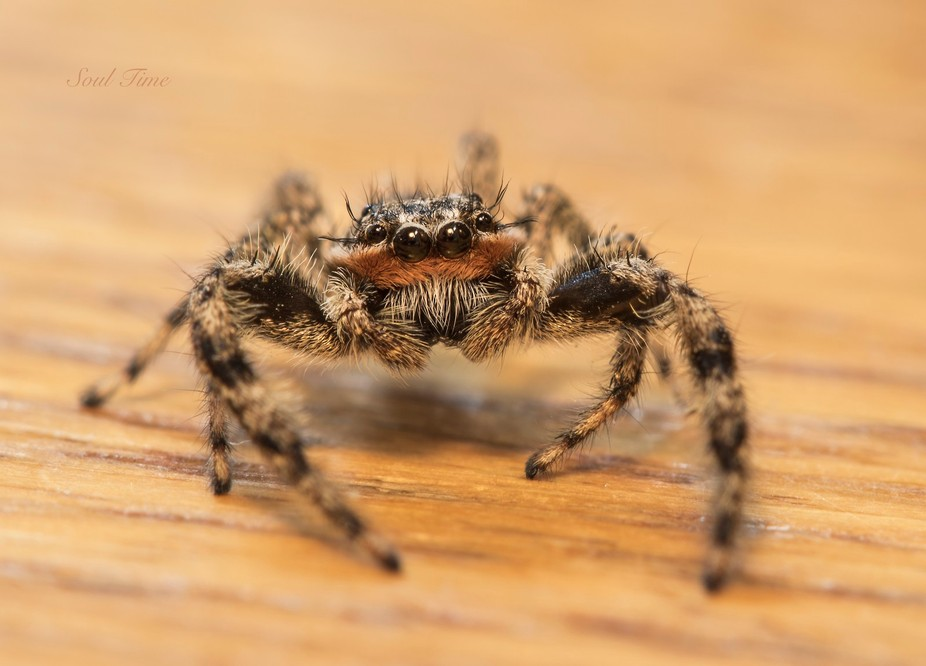 What do you do when you see a spider in the house? You take out your camera and shoot it, of course.