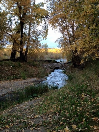 a branch of the Bow River at Pearce Estate in Calgary