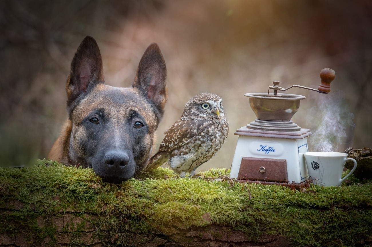 Capturing Portraits Of Dogs And Owls
