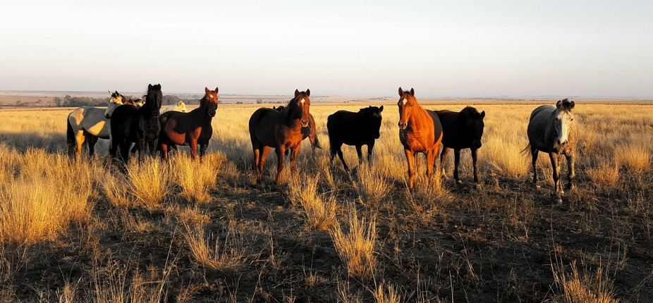 Taken in the Freestate South Africa, wintertime.