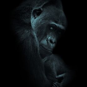 I did some PP on my image Silverback
