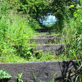 Wooden Steps leading through trees to top field.