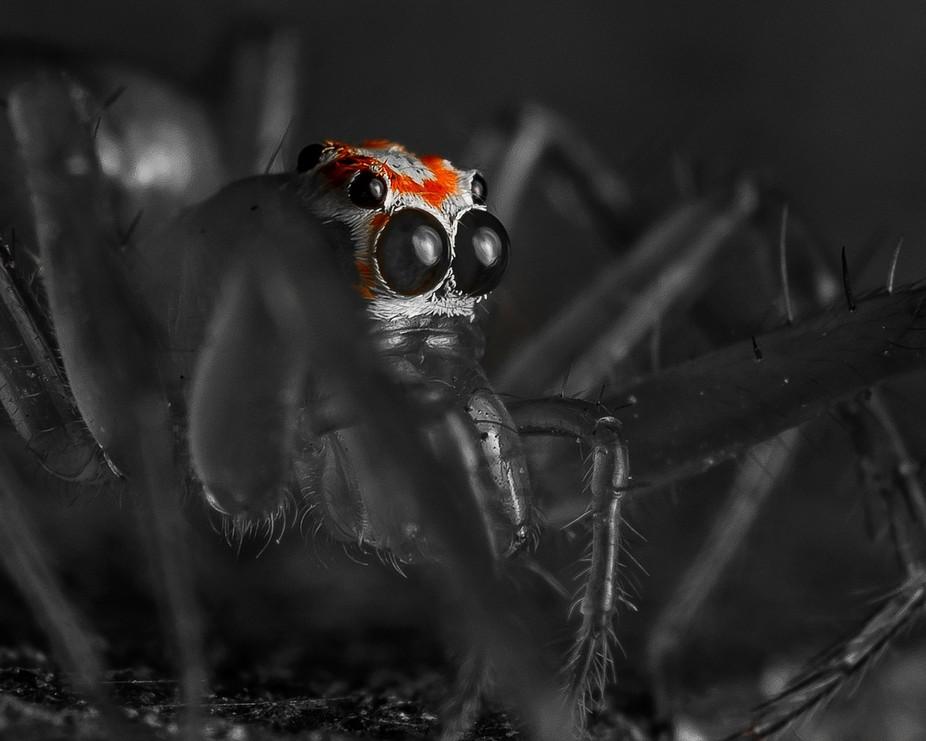 Red Color Splash with Spider