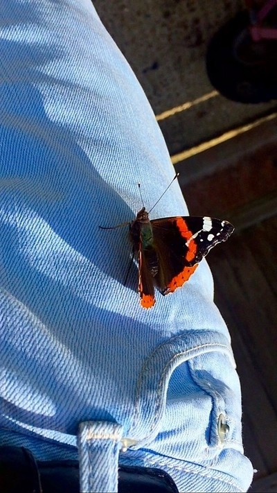Butterfly on my jeans
