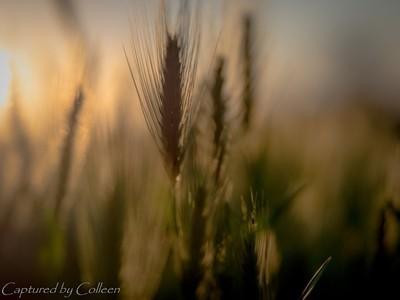 Grass in the morning sun
