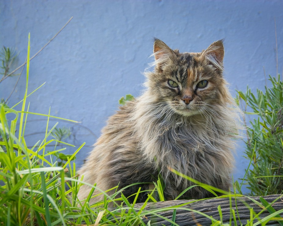 Kitty is an ancient old girl who lives in the stables down the road.  My wife visits her every da...