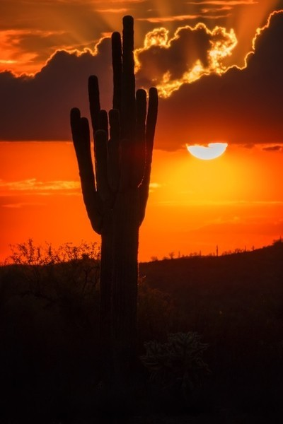 Desert's Dusk