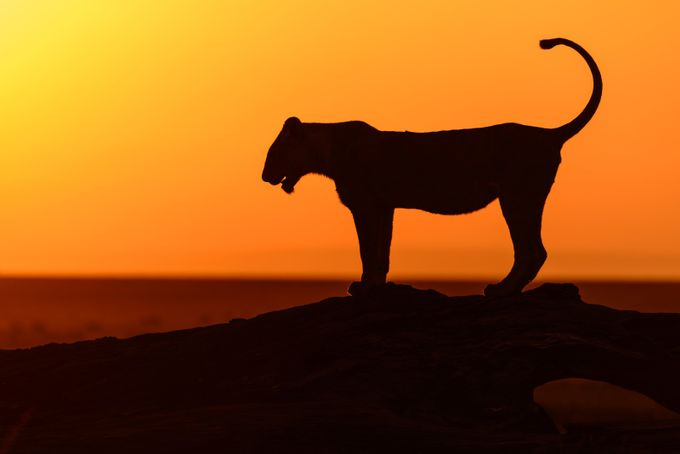Embracing the Sunrise by kathrynsklenakdannay - Explore Africa Photo Contest