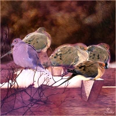 Doves in early Spring