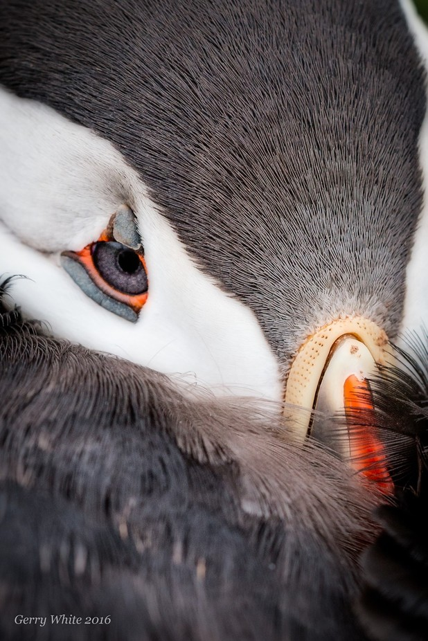 Eye candy.. by gesser - Wildlife Photo Contest 2017