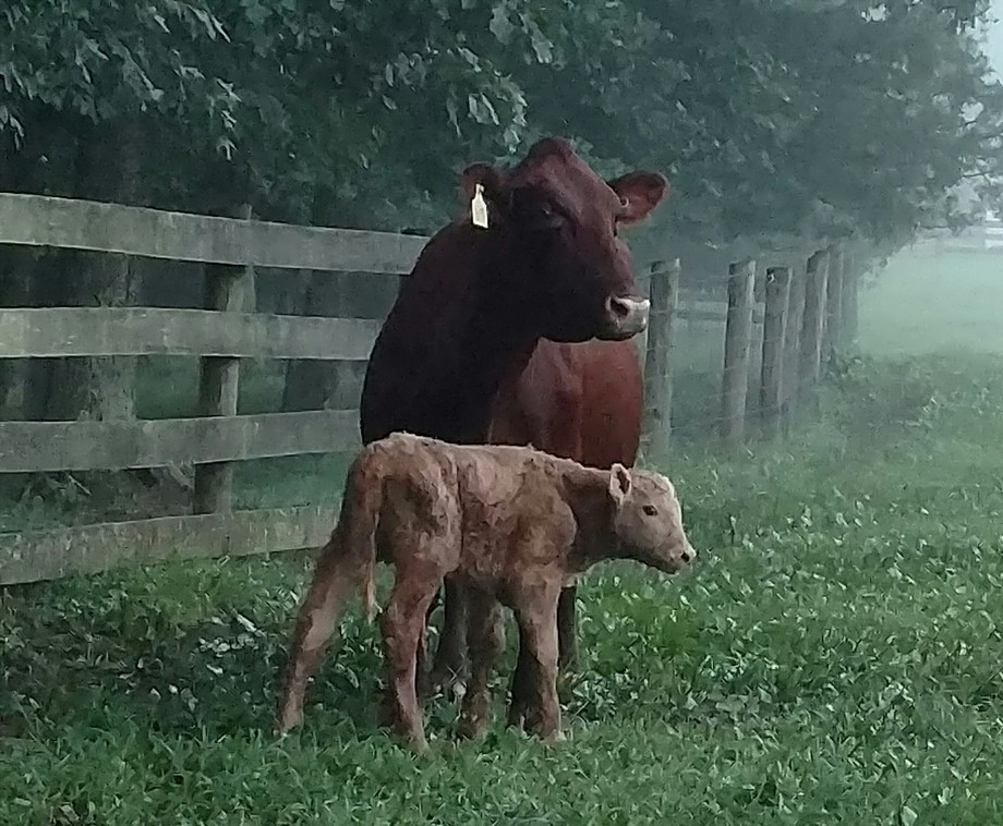 This little guy was born in the night just so I could find him with his Mom at 6:30 that morning.