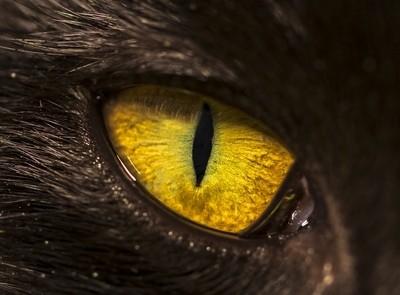 Eye of the Kitty