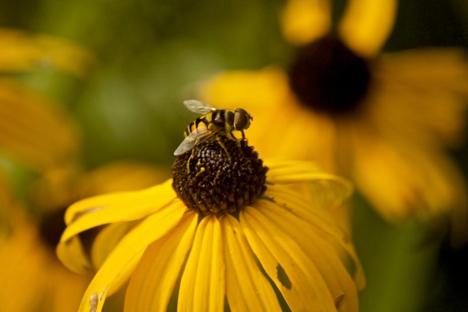 a bee in my garden