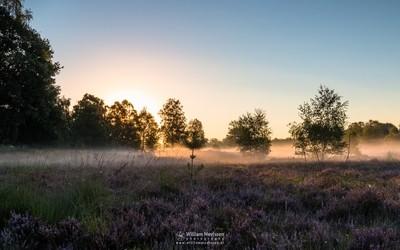 Heathland Mist
