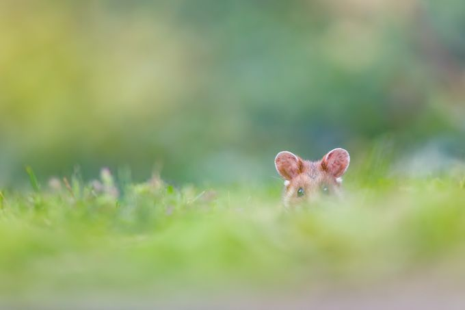 ~ You can't see me ~ by HenrikSpranz - Can You See Me Photo Contest