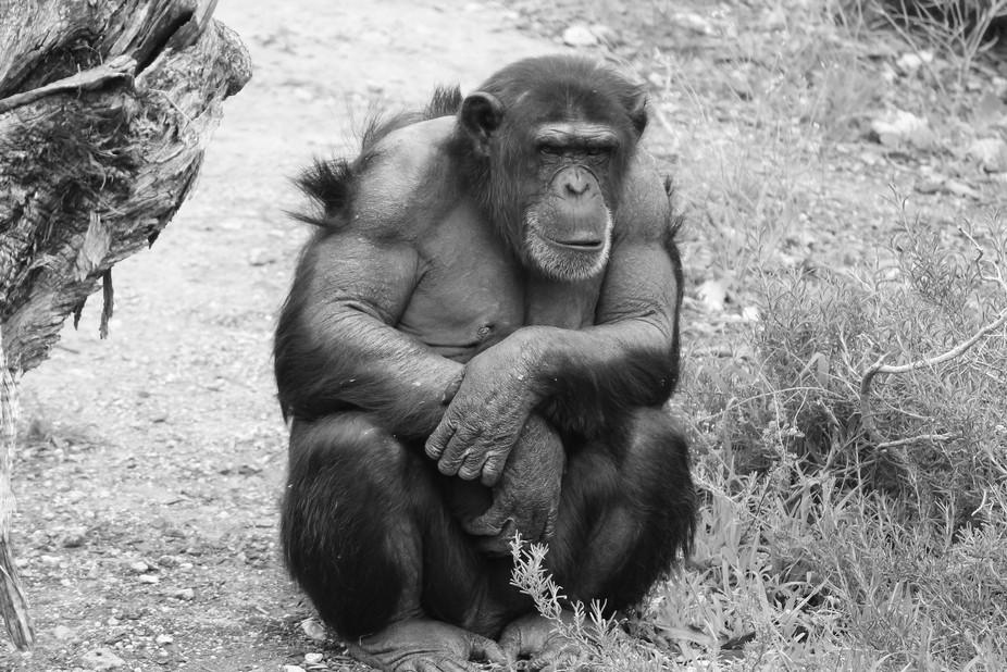 Monarto Zoo South Australia