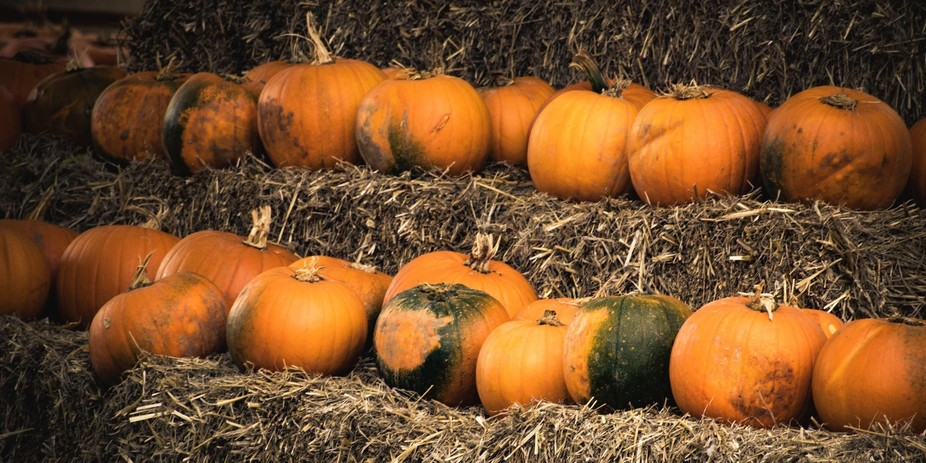 Pumpkins ready for sale from a farm shop.