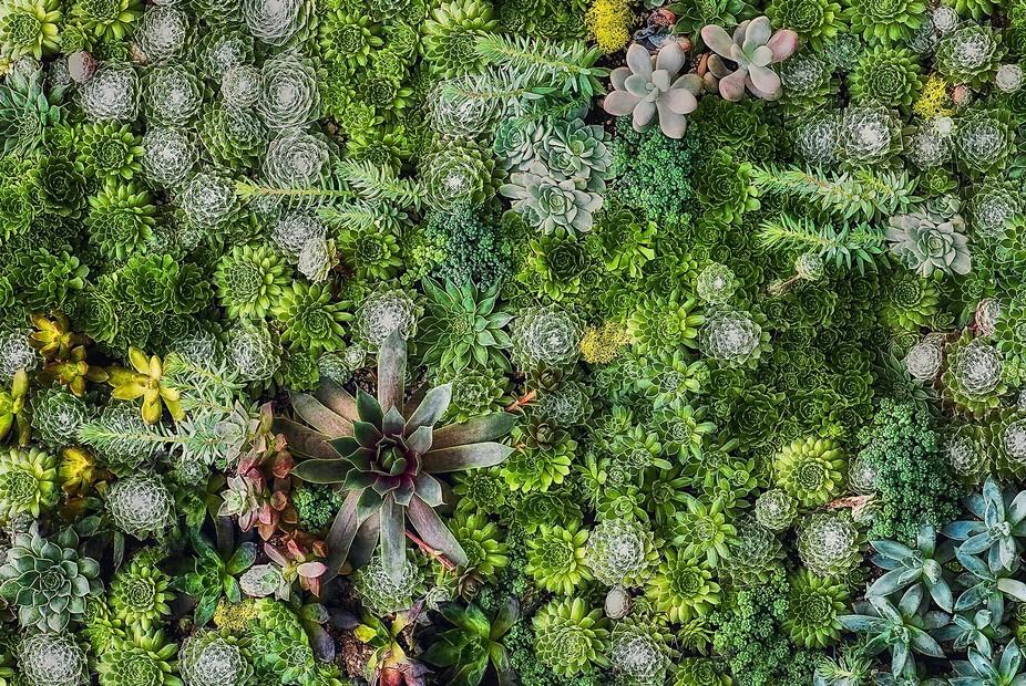 Horticulture-101