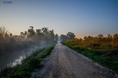fogi morning