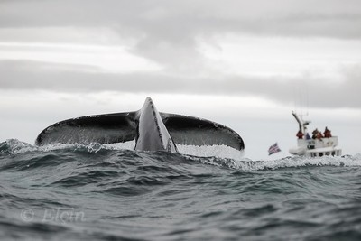 Whale Tail and Whale watchers