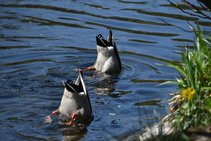 Taken at Rutland Water, England.