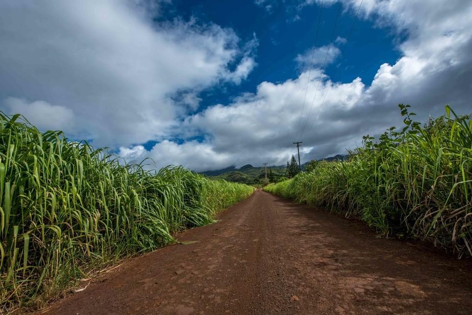Waialua Backroads