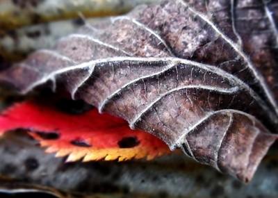 RIMG8816 autumn leafes