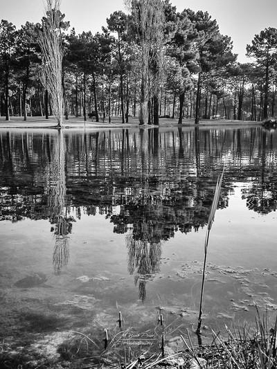 Lake Reflections B&W