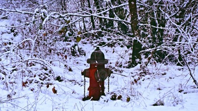 Little Fire Hydrant in the Big White Woods