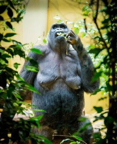 Zurich Zoo Chillin'
