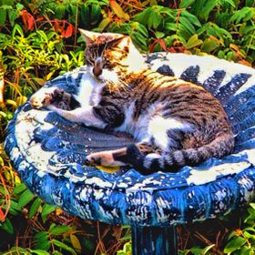 I thought it was kind of ironic that a cat would take up residence in a birdbath.