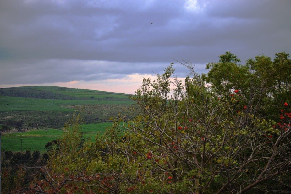 Taken on a Friday morning,this photograph of the pending burst of rain was taken at Botrivier,Sou...