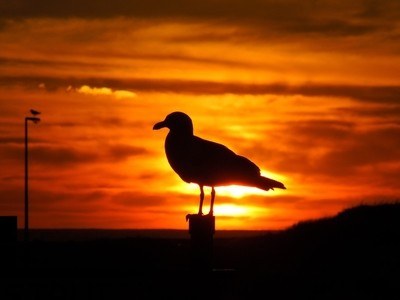 Sunrise with Seagull Silhouette