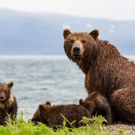 A mama-bear with her four little cubs