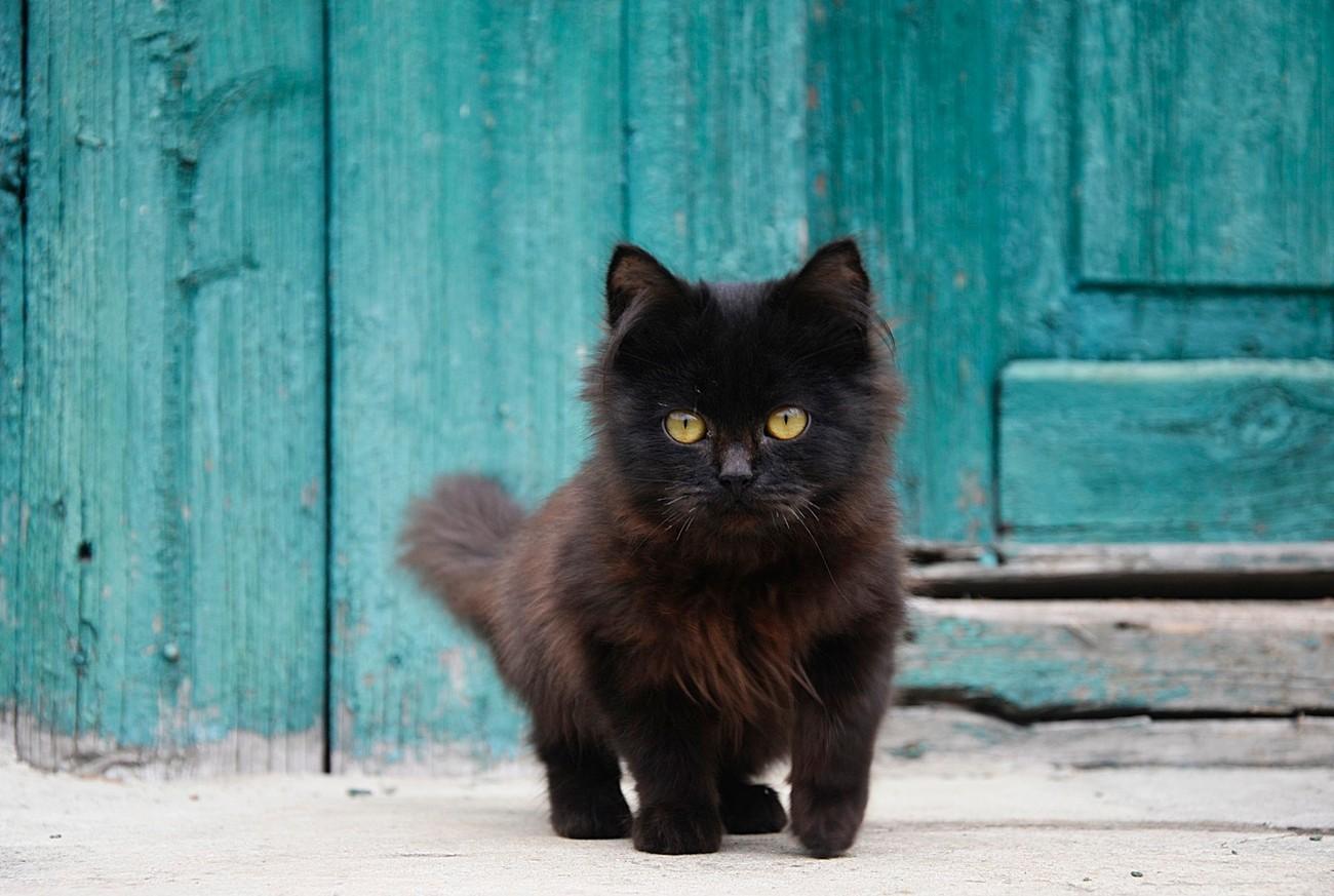 Cute Kittens Photo Contest Winners