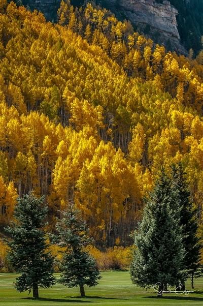 Yellow & Green Trees