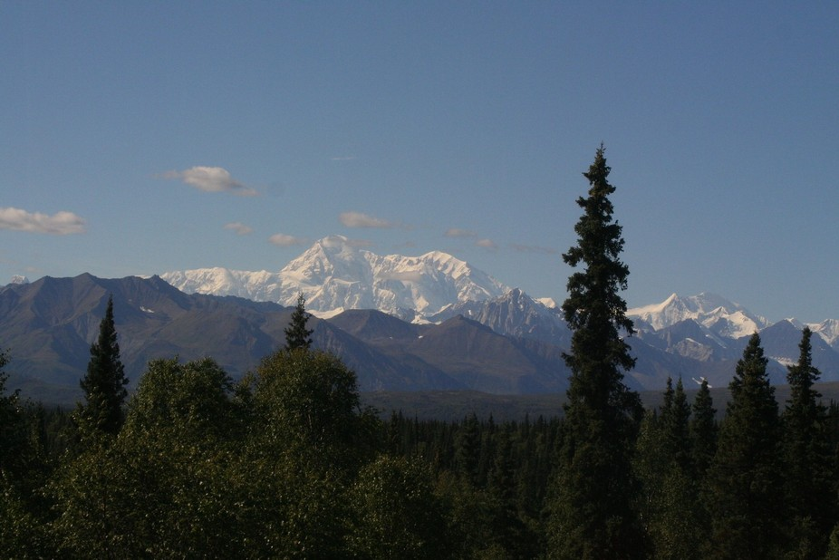 Denali with black spruce