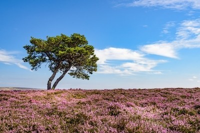 Alone In The Heather