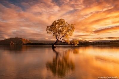 Tree on Fire, Wanaka, New Zealand